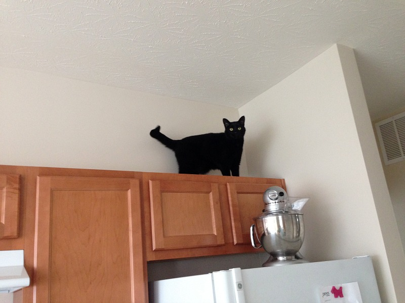 Cat on upper cabinets