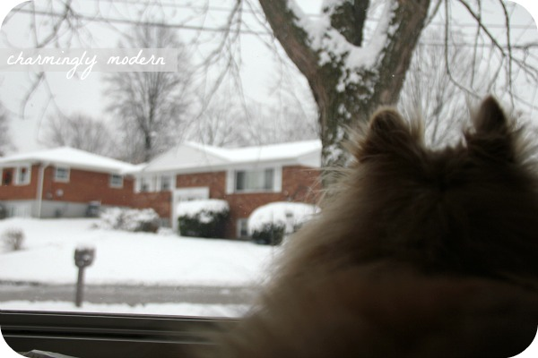 aslan looks out the window