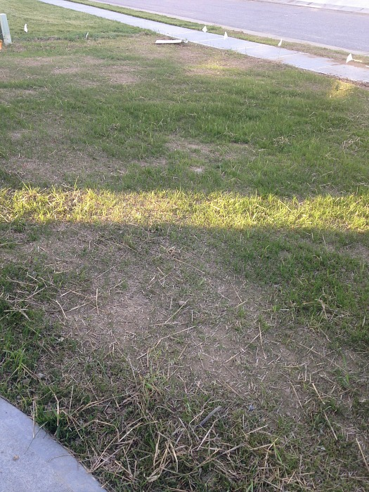 patchy grass front yard