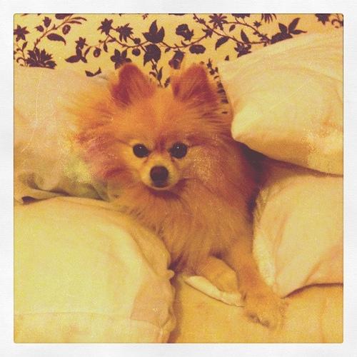 Aslan builds a pillow fort